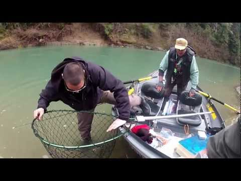 North Cal Sportfishing - EEL River Chrome Steelhead Fishing From Drift Boat