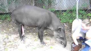Antas Pintoras, Zoológico de Houston 5