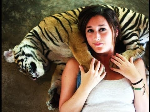 Playing with Tigers in Phuket, Thailand