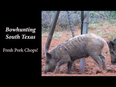 Bowhunting Organic Pork Chops in South Texas!