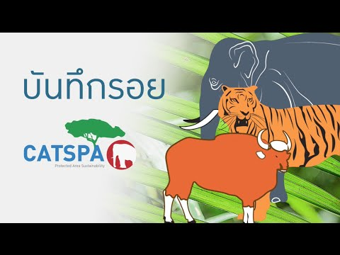 Report on the progress of CATSPA project