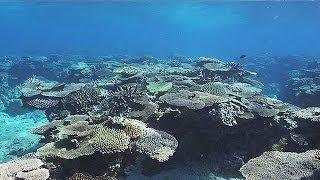 奄美大島 珊瑚礁の海