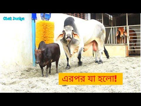 এরপর যা হলো!..., সাদিক এগ্রো, মোহাম্মদপুর, বেড়িবাধ, ঢাকা | sadeeq agro 2020