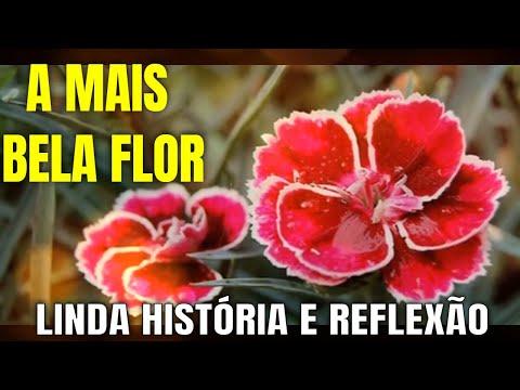 Imagens de reflexão - MENSAGEM  DE BOM DIA - A MAIS BELA FLOR - REFLEXÃO DO DIA