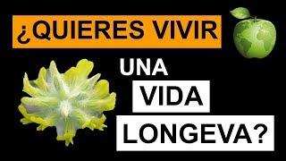 Video Astrágalo: La Planta Medicinal de la Longevidad MP3, 3GP, MP4, WEBM, AVI, FLV Juli 2019