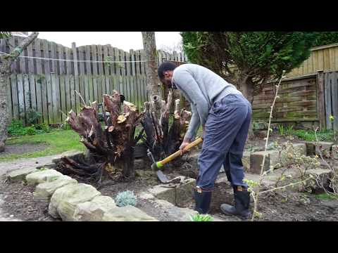 How to dig out tree stumps without power tools!?