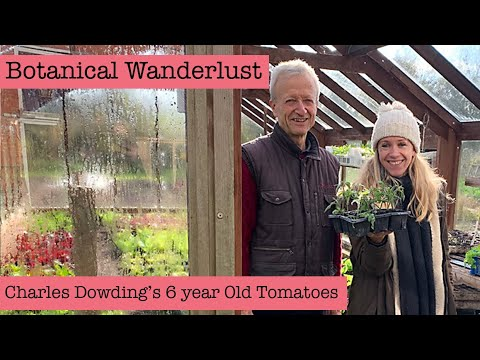 Botanical Wanderlust: How Charles Dowding Maintains His 6- Year-Old Tomato Plants!