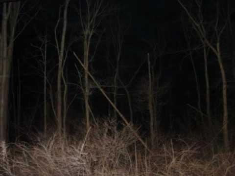 spaventose creature nell'oscurità!
