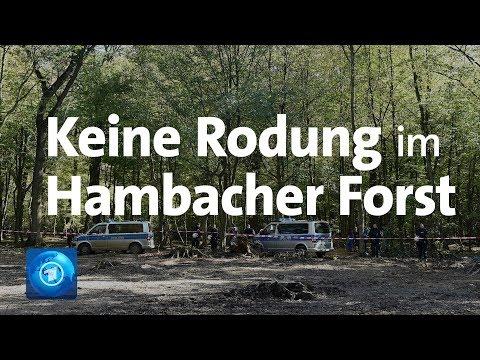 Gericht entscheidet: Rodung im Hambacher Forst gestoppt