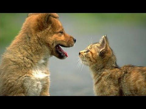 cani e gatti - amicizia incondizionata