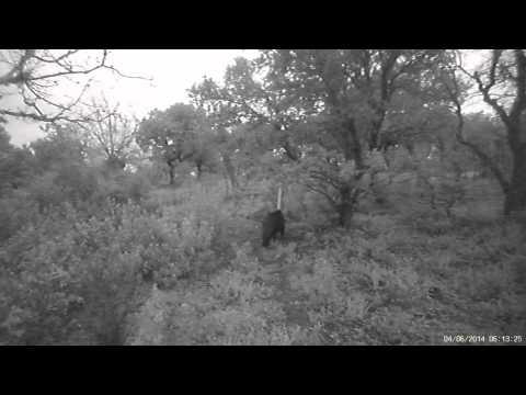 Demo Video Trail camera Ltl Acorn 5310WA 5310WMG Wide Lense