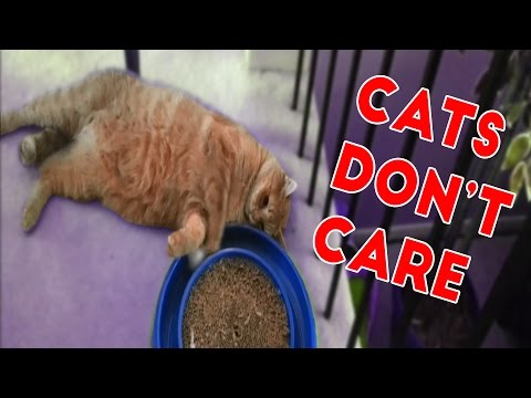 Cats Don't Care Funny Pets Videos of 2016 Compilation:  Cats really just don't care! Funny Pet Videos brings you the best funny animals videos from 2016. Funny Cat Videos ► http://www.ascendents.net/?v=BoM9-bXzDjk&list=PLf6Ove6NWsVeM5MOVs_Yzj3AsV41DfQ9R&index=1Check out more Funny Dog Videos ► http://www.ascendents.net/?v=7zZU-5uPHdQ&list=PLf6Ove6NWsVcM75fCjLk3i-9IkpCmPyXw&index=3Click here to Subscribe ► http://www.youtube.com/user/tailsnfails?sub_confirmation=1Welcome to Funny Pet Videos, a channel dedicated to cute, fluffy cats and curious, rambunctious dogs. We are here to fill your life with more furry and funny things the adorable friends in our lives do. Every Thursday, Friday, Saturday and Sunday we'll have a new compilation of the funniest home videos of cats, dogs, birds and all kids of animals being equally hilarious and adorable. Be sure the Subscribe to our channel to never miss one! So sit back, relax and have a laugh on us. For licensing information contact us at licensing@collabcreators.com. We'd love to have your furry friend on our channel! Send us a link to your video if you would like to see it in one of our compilations.