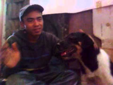 gratis download video - asan-perkosa-anjing
