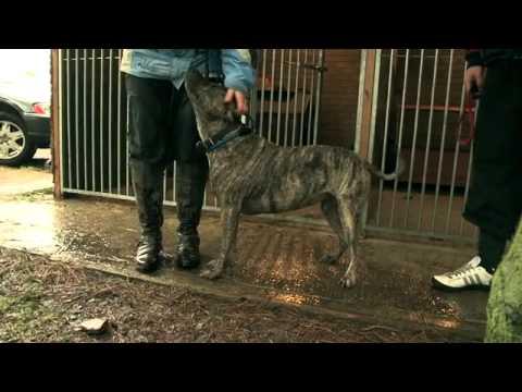 'A Dog's Life' Film