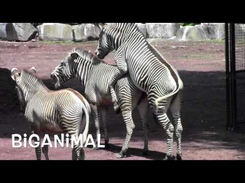 Amazing animal. Mystery of life