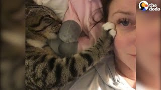Cat Kneading Is So Satisfying | The Dodo by The Dodo