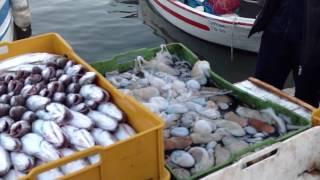 Mola Di Bari Italy  City new picture : Mola di Bari - Rientro peschereccio