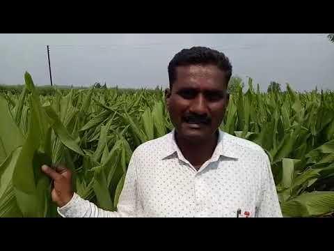 Galmukt Dharan Galyukt Shivar Sucess Story