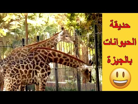 حديقة الحيوان المصرية بالجيزة، للاطفال، اصوات طبيعية، حيوانات الغابة، عالم الحيوان للاطفال