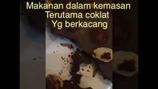 Video Coklat ada belatungnya,chocolate with maggot in side MP3, 3GP, MP4, WEBM, AVI, FLV Desember 2017