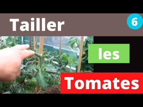 Etêter vos pieds de tomates