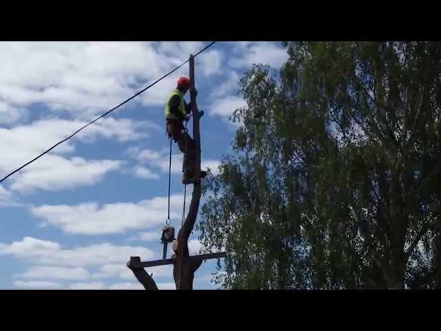 Tree Climbing/Arbourist - Hobart TAS 7000. Stump Pro