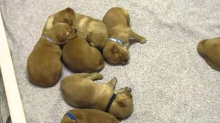 Puppy Pile - Here Comes Mom!