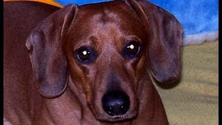 Video EMERICVS: In Memory of Rusty