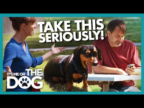 Victoria Gets Mad After Owner Caught Slacking | It's Me or The Dog