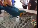 Exhibicion de Aves Exoticas, Lajas PUerto Rico
