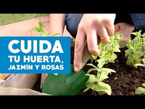 jazmin - Cultivar el huerto propio no sólo es una alternativa sana para quienes privilegian lo natural o viven en el campo. También logra embellecer su patio. Aprenda...