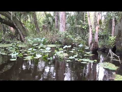 Central Florida Nature Adventures, llc Birding Tours