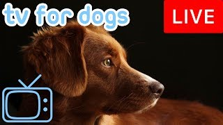 Video TV for Dogs! Chill Your Dog Out with this 24/7 TV and Music Playlist! MP3, 3GP, MP4, WEBM, AVI, FLV November 2018
