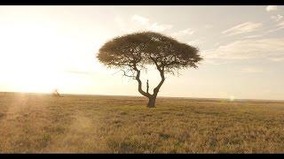 Download Lagu PNL - La vie est belle [Clip Officiel] (Réal. Mess) Mp3