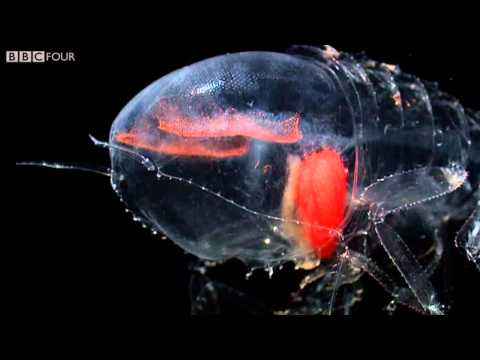 Beautiful Translucent Deep Sea Creatures from the Ocean  s Twilight