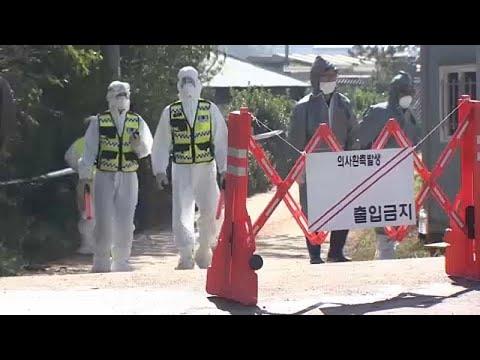 Afrikanische Schweinepest breitet sich in Südkorea weiter aus