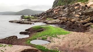 Video Seaside Light Rain & Thunder w/ Ocean Waves Lapping on Rocks | Stormy Weather Sounds for Sleeping MP3, 3GP, MP4, WEBM, AVI, FLV Agustus 2019