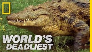 World's Deadliest - Croc Trap