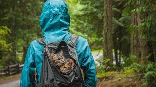 どこまでもいっしょに冒険しよう!捨て猫だったボルトとキール、飼い主さんとアウトドアライフを満喫