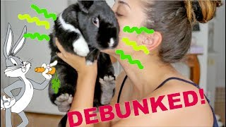 TOP 5 MYTHS ABOUT RABBITS...DEBUNKED! by Lennon The Bunny