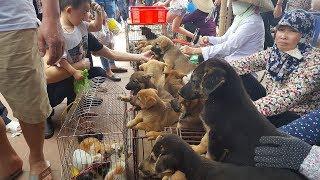 Video Khám phá chợ bán chó mèo cảnh rẻ và đẹp nhất Việt Nam MP3, 3GP, MP4, WEBM, AVI, FLV Januari 2019
