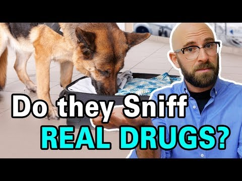 Are Drug Sniffing Dogs Trained By Sniffing Drugs?