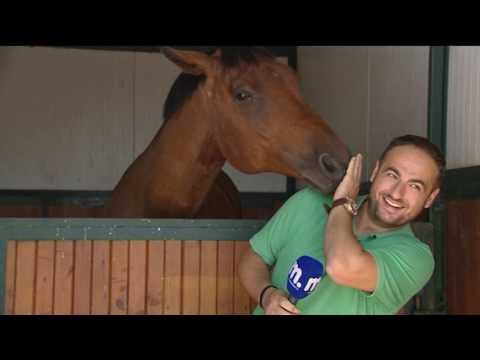 這位男記者很認真的報導時「身後那匹馬已在蠢蠢欲動」,當他一轉身後…我重播了幾十次!