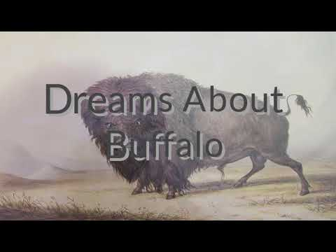 Dreams About Buffalo | Dreams Meaning And Interpretation