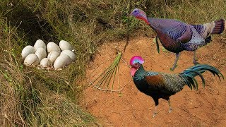 Video Primitive Technology: Awesome Quick Turkey Trap Using Traditional Trap That Work 100% MP3, 3GP, MP4, WEBM, AVI, FLV Juni 2019