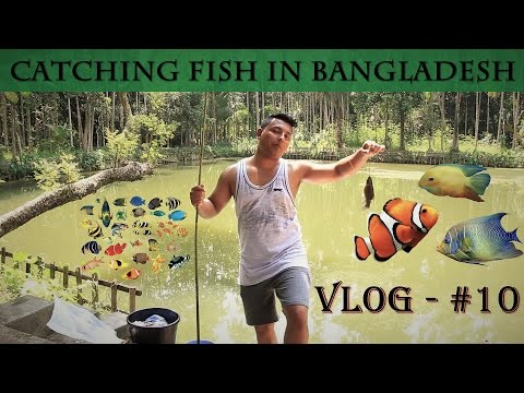 Catching Fish in Bangladesh 🇧🇩 | Vlog - #10 | Arifur Rahman
