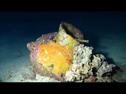 Найдены останки финикийского корабля, затонувшего 2700 лет назад