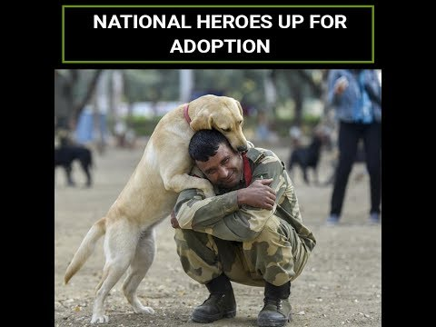 Adopt A Dog That Dedicated Its Life To Saving The Country!