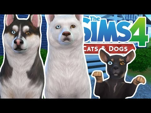 Welcome Wolf, Storm and Lark!   The Sims 4 YouTuber Pets   Episode 6