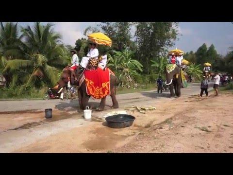 Download Elephant in Lahansai 2016 hd file 3gp hd mp4 download videos